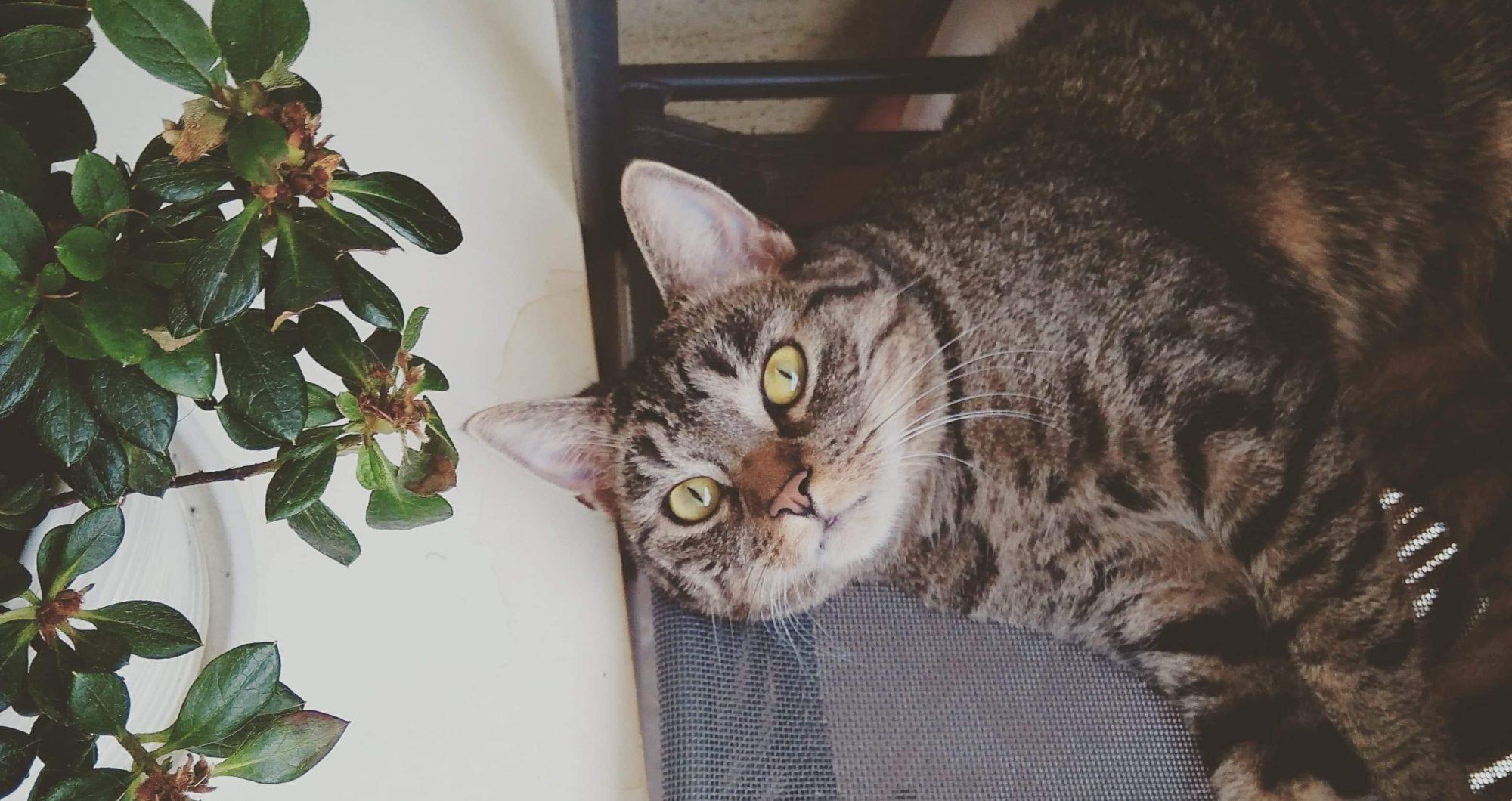 Koci Codziennik
